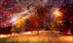 Couleurs d'automne01