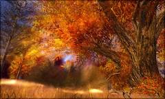 Couleurs d'automne02