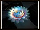 Moon Lotus Wind