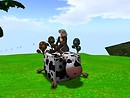 Love my new cow chair! - chimera.cosmos