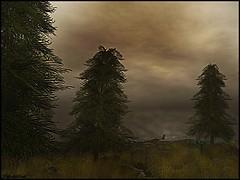 Stormy Solitude