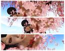 ~*RunoRuno*~ Cherry Blossom Petals