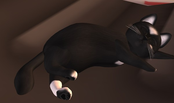 meerkat-cat-clyde-sleeping-day1