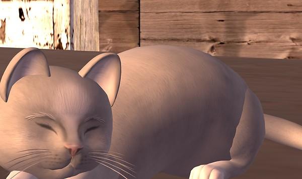 meerkat-cat-bonnie-sleeping-day1