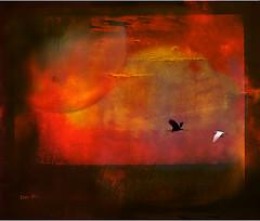 cranes -  クレーン