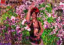 Spring Blossoms....