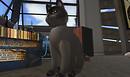 kissingcats-Snapshot_003