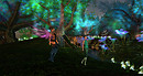 Forest of light M&qL @ the Faire