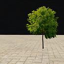 QT tree 58 summer