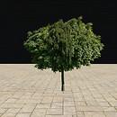 QT Tree 60 summer dense