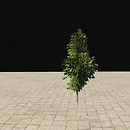 QT tree 55 turning sm