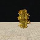 QT  tree 54 2 autumn