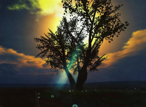 natures spotlight