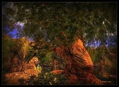 Mighty Tree at Dantooine
