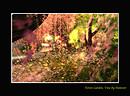 Forest Garden, Vine 2
