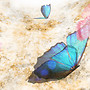 Alirium Butterflies