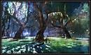 Swamp Under the Moonlight