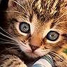 My Cat Grey Eyes <4