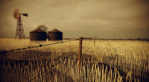 AM Radio Wheat field 1