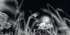 Storks take flight