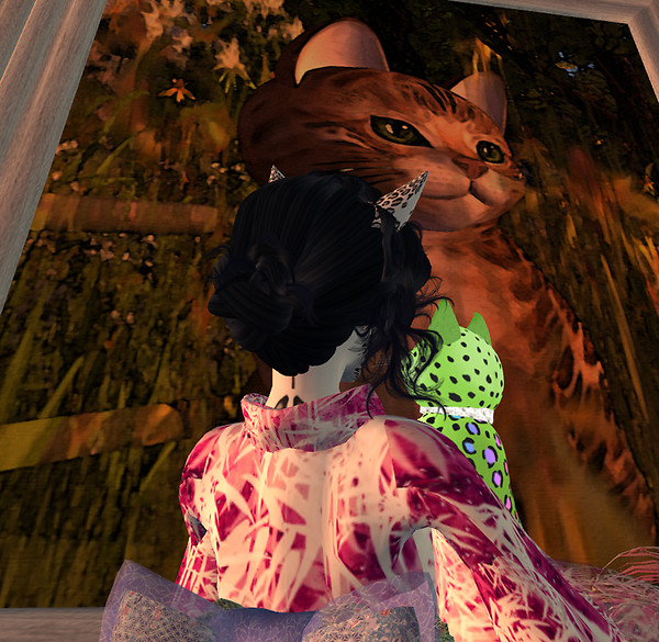 June24_kittycats_photocontest1