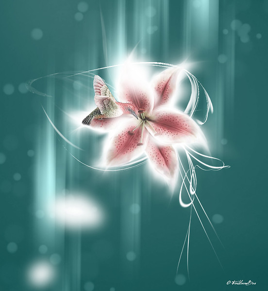 Star flower big pic
