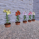 QT potted asiatic lillies