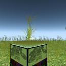 QT grass meadow
