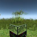 QT dense grass meadow