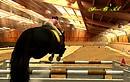 Horse Life Jump.....