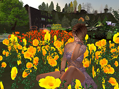 Teal With Her Poppies - InWorldz