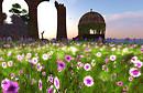Flower Field_Horizon Dream