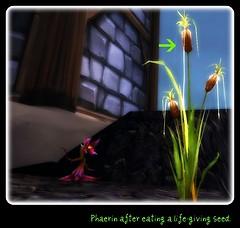 Phae as Weed
