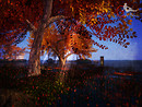 twilight shine