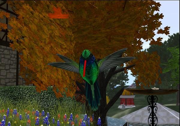 Hummingbird in Autumn