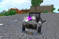 Kitty Crusiers