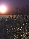 Winterlight 2