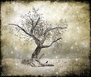 *Winter Magic*