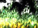 Photohunt 01/11/12 Theme Blur