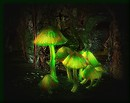 Green Mushrooms