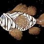 The Big Fish