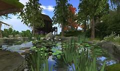 The pond - altair.memo