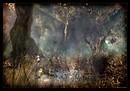Quand la forêt se poudre de bleu