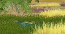 Grassland