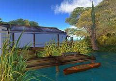 rainforest 090410_007