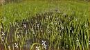 Unedited Grass