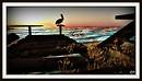 Pelikan Sunset