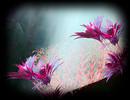 Fairy-Garden-2_030