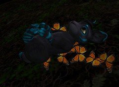 Snuggle ALL the Meeroos!