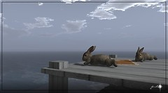 Rabbits may dream of the ocean too
